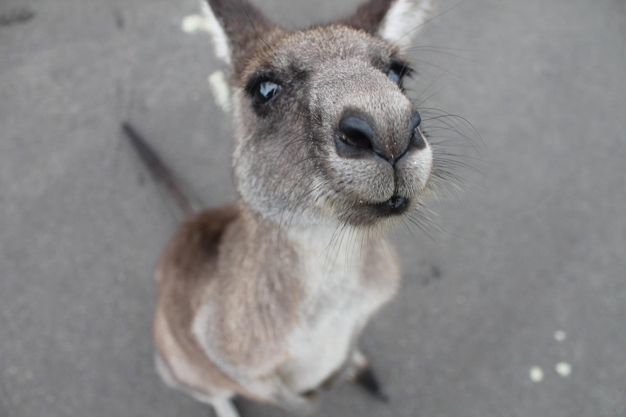 Versand nach Australien