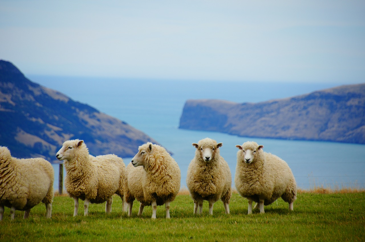 Versand nach Neuseeland